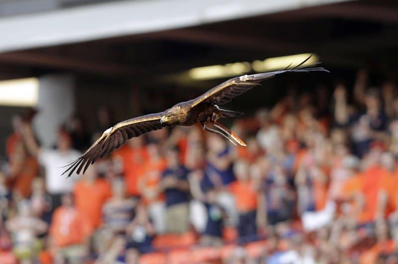 "Auburn Tigers ""Nova"" Eagle"